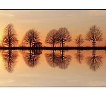 Tree Reflections. by Alyson Fennell