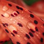 Catching Rain Drops by Eileen McVey