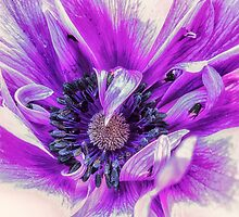 Purple Treasure by Susan Werby