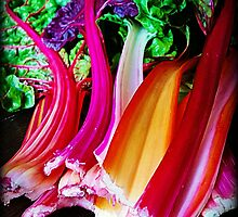 Rainbow Chard by kchase