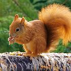 Red Squirrel with Nuts by Stephen Frost