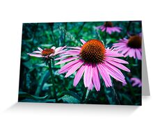 Echinacea Petals Greeting Card