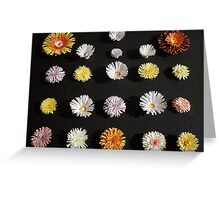 Paper Flowers 2 Greeting Card