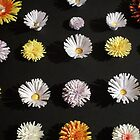 Paper Flowers 2 by gevie-g