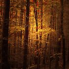 THE FOREST OF LIGHT by leonie7