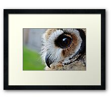 Loki-The mexican striped owl Framed Print