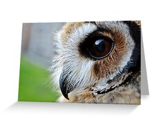 Loki-The mexican striped owl Greeting Card
