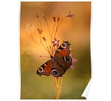 Peacock butterfly on bell flowers at sunset Poster