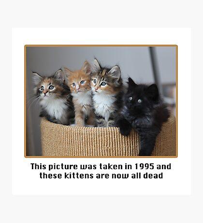 Cute Kittens Photographic Print