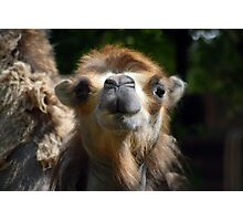 Cute Camel In Your Face  Photographic Print