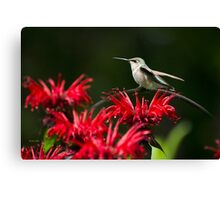 Hummingbird on Flowers Canvas Print
