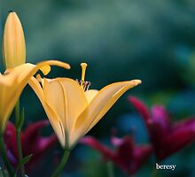 Yellow Lily by beresy