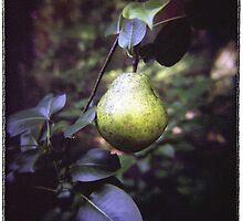 Pear by Rebecca Tolk