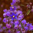 Blue Wild flower by Paul Gilbert