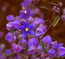 Blue Wild flower by Paul Gilbert