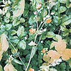 Anata by Roentgen