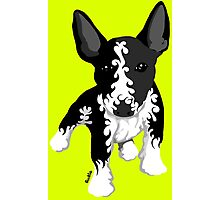 Spiral English Bull Terrier Puppy Photographic Print