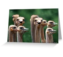 I SAY NO 6! - AT THE OSTRICH RACE - Struthio camelus Greeting Card