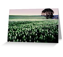 lupin field  Greeting Card