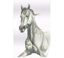 Rosie the Hackney horse Poster
