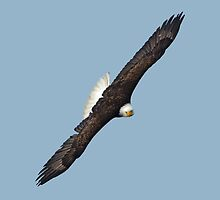 Eagle on the Turn by Skye Ryan-Evans