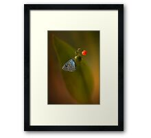 Three colours Framed Print