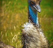 Emu by RandyHume