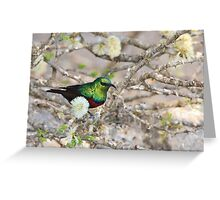 Marico Sunbird - African Wildlife - Iridescent Colors and Beauty Greeting Card