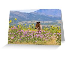 Foal and Flowers - 2 Greeting Card