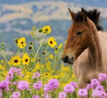 Foal and Flowers - 2 Sticker