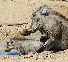 Warthog - African Wildlife Background - Animal Babies by LivingWild