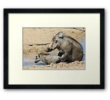 Warthog - African Wildlife Background - Animal Babies Framed Print