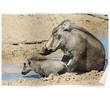 Warthog - African Wildlife Background - Animal Babies Poster