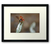Got to fly Framed Print
