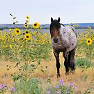 Roan Foal in Sunflowers-2 by Kelly Jay