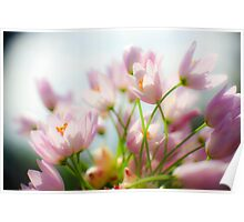 Mauve wildflower blooming in spring  Poster