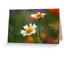 Crown Daisies Greeting Card