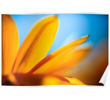 Extreme close up of a yellow daisy with a blue sky background  Poster
