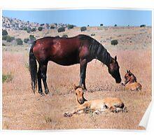 Newborn Foal in the Grass Poster