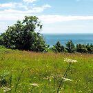 Coastal Path Overlook 2 - Lyme Regis by Susie Peek