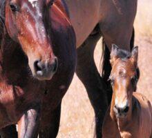 Newborn Foal's First Steps Sticker