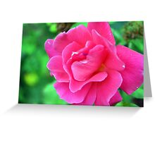 Pink rose on green natural background. Greeting Card