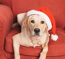 Dog with Christmas hat on armchair by Elisabeth Coelfen