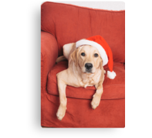 Dog with Christmas hat on armchair Canvas Print