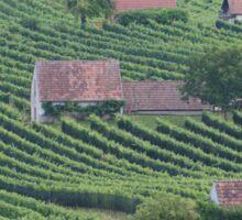 Vineyards am Wagram, Lower Austria Sticker