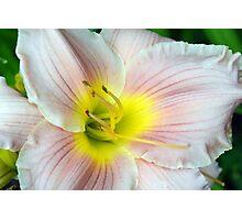Macro on white summer flower. Photographic Print