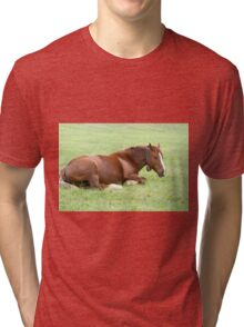 Horses grazing in a green meadow  Tri-blend T-Shirt