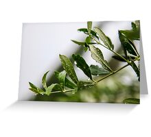 Olive leaf with dew drops  Greeting Card