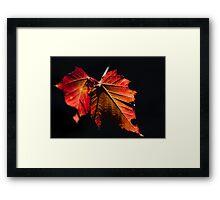 Autumn Leaves - Araluen Botanical Park Framed Print