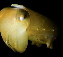 Snooted Cuttlefish by MattTworkowski